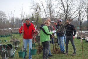 Baumausgabe-Streuobst_Naturpark_Südsteiermark